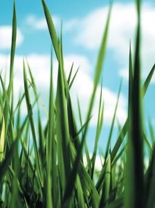 La fiscalité verte devrait être coeur des débats de la conférence environnementale du gouvernement, annoncée pour la mi-septembre.