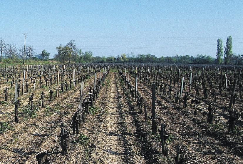 Forte de 15% d'actifs et de 352 000 hectares de terres à vocation agricole, soit 54% de sa superficie, la Meuse est avant tout un département rural et entend bien le faire savoir…
