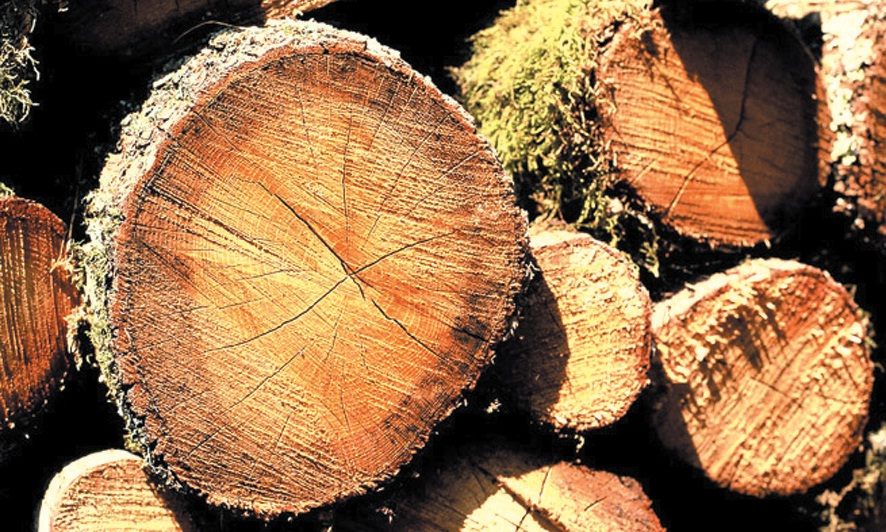 La filière bois s'affiche en Lorraine comme l'un des premiers employeurs de la région. Avec près de 30 000 salariés, cette filière se doit aujourd'hui de réellement se structurer pour perdurer.