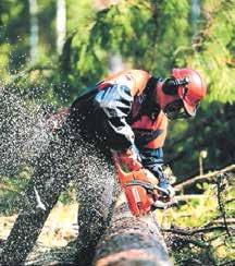 Nouvelle mission pour l'Office national des forêts ! Outre la gestion des forêts, l'ONF aura désormais pour vocation à favoriser le développement de la filière «bois» en Lorraine.