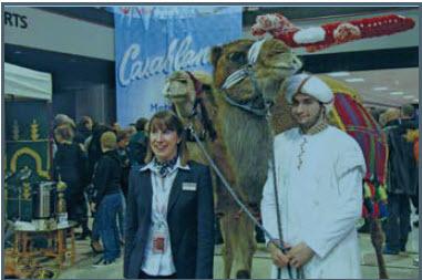 MNL a inauguré sa nouvelle liaison avec Casablanca à grands coups de chameaux.