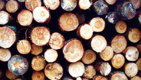 La filière Bois apparaît bien soutenue par l'État et la Région.