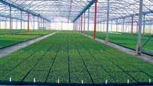 Neuf horticulteurs lorrains viennent d'intégrer la démarche «La Lorraine notre signature ».