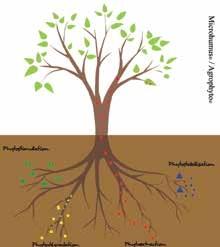Microhumus développe le concept innovant de phytoremédiation.