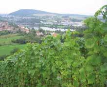 La vigne lorraine en lice au Concours Général Agricole en février.